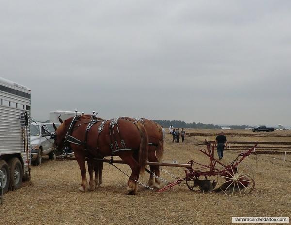 Single furrow riding plough