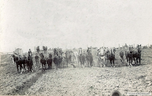 The Plowing Bee about 1904