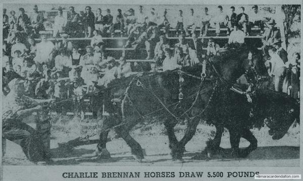 Charlie Brennan horses