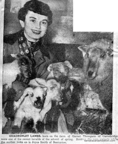 Garnet Thompson Lambs
