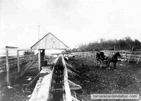 1890. Log tram for moving logs from Lake St. John
