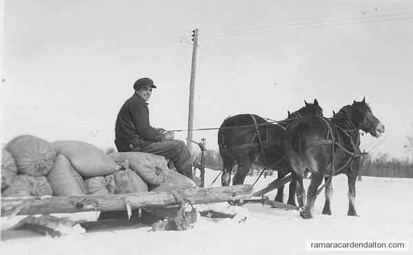 Basil Harrington with grain & horses